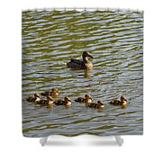 Late Afternoon Swim Shower Curtain