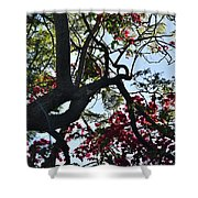Late Afternoon Tree Silhouette With Bougainvilleas I Shower Curtain