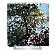 Late Afternoon Tree Silhouette With Bougainvileas II Shower Curtain