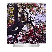 Late Afternoon Tree Silhouette With Bougainvilleas IIi Shower Curtain