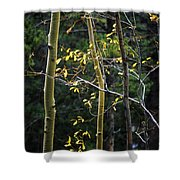 Late Aspen Shower Curtain