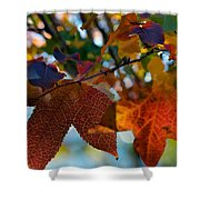 Late Autumn Colors Shower Curtain by Stephen Anderson