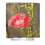 Late Beauty Between Thorns Shower Curtain