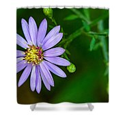 Late Purple Aster Shower Curtain