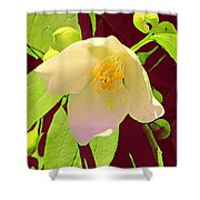 Late Spring Flower Shower Curtain