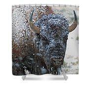 Early Spring Late Snow Buffalo Shower Curtain