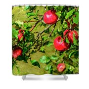 Late Summer Apples Shower Curtain