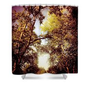 Late Summer View Of Sky And Trees Shower Curtain