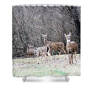 Late Winter Whitetails Shower Curtain