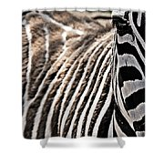 Latter Half Shower Curtain