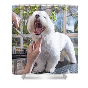 Laughing Adorable White Dog Is Groomed Shower Curtain