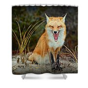 Laughing Fox Shower Curtain