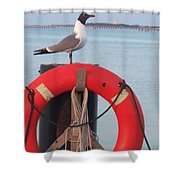 Laughing Gull At Lewes Shower Curtain