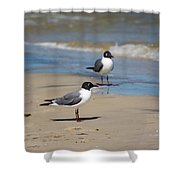Laughing Gulls On The Beach Shower Curtain