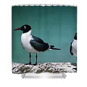 Laughing Gulls Shower Curtain