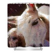 Laughing Llama Shower Curtain