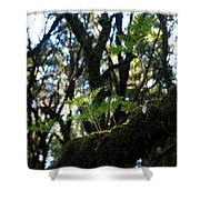 Laurisilva 2 Shower Curtain