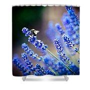 Lavander Flowers Macro With Bee In Lavender Field Shower Curtain by Raimond Klavins