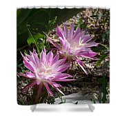 Lavendar Cactus Flowers Shower Curtain