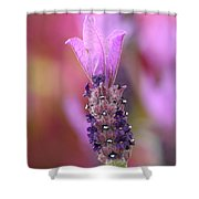 Lavendar Flower Shower Curtain