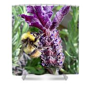 Lavender And Busy Bee. Shower Curtain
