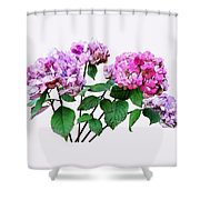 Lavender And Rose Hydrangeas Shower Curtain