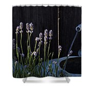 Lavender And Watering Can Shower Curtain