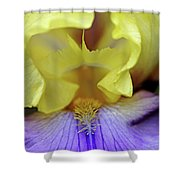 Lavender And Yellow Iris Heart Shower Curtain
