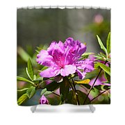 Lavender Rhododendrun Shower Curtain