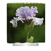 Lavender Bearded Iris #2 Shower Curtain