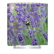 Lavender Beetle Shower Curtain