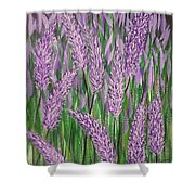 Lavender Blooms Shower Curtain