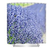 Lavender Blossoms Shower Curtain