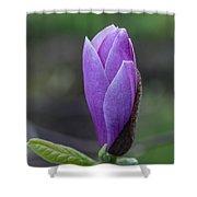 Lavender Blossoms Shower Curtain