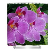 Lavender Colored Orchids Shower Curtain