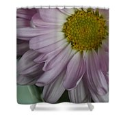 Lavender Daisy Shower Curtain