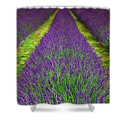 Lavender Dream Shower Curtain