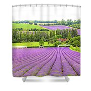 Lavender Farms In Sevenoaks Shower Curtain