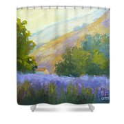 Lavender Field Shower Curtain