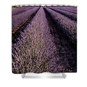 Lavender Field Provence France Shower Curtain