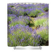 Lavender Field, Tihany, Hungary Shower Curtain
