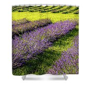 Lavender Fields Forever Shower Curtain by Kendall McKernon