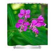Lavender Fireweed Shower Curtain