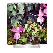 Lavender Fuchsias Just Hanging Around The Garden Shower Curtain