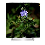 Lavender Hue Shower Curtain