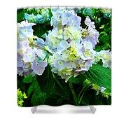 Lavender Hydrangea In Garden Shower Curtain