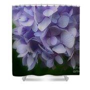 Lavender Hydrangea Shower Curtain