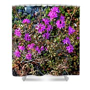 Lavender In The Wild Shower Curtain