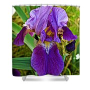 Lavender Iris At Pilgrim Place In Claremont-california  Shower Curtain
