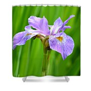 Lavender Iris Shower Curtain